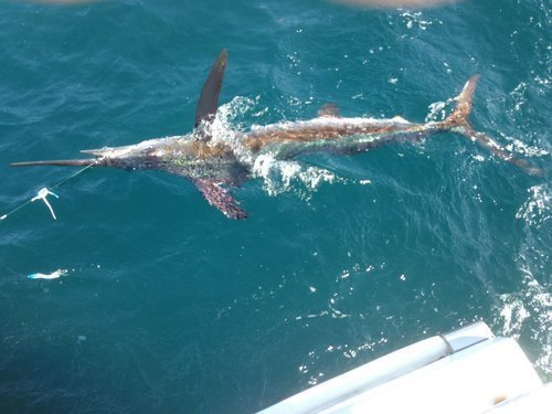Orgegon Inlet Fishing Charters